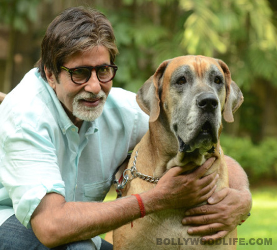amitabh bachchan does photoshoot with his pet dog bollywoodlife com