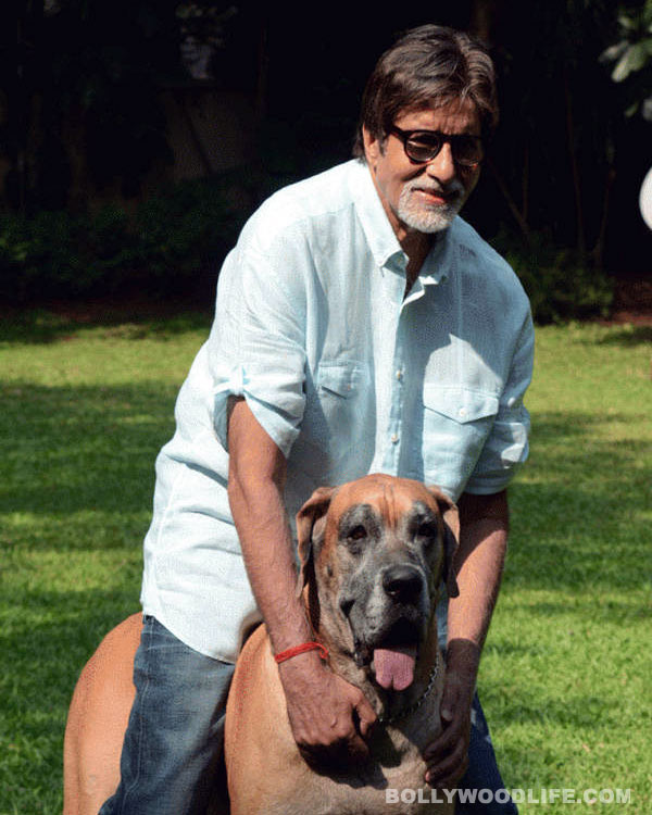 Amitabh Bachchan's pet dog Shanouk dies!