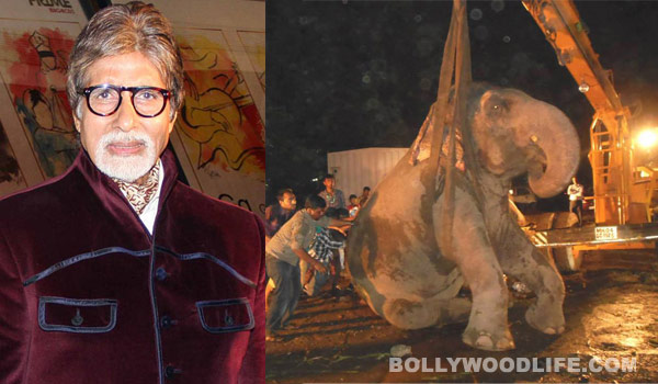 Amitabh Bachchan appeals to animal lovers to save elephant Bijlee
