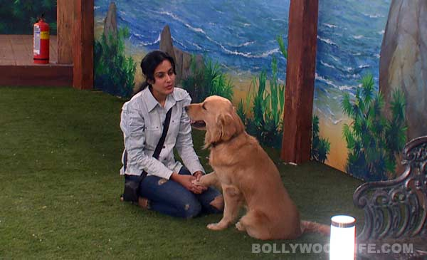 Bigg Boss 7 diaries day 39: Kamya Punjabi and Armaan Kohli shed tears of regret!