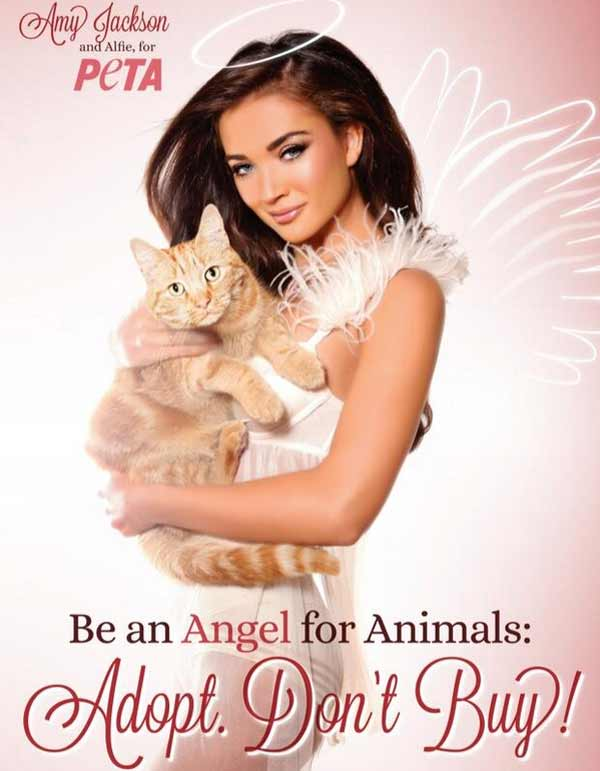 Amy Jackson: An angel to animals