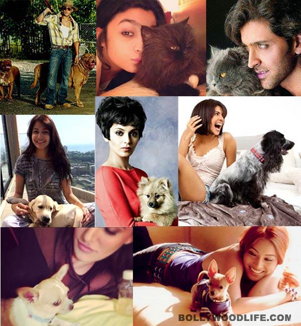 Salman Khan, Nargis Fakhri and Varun Dhawan's puppy love!